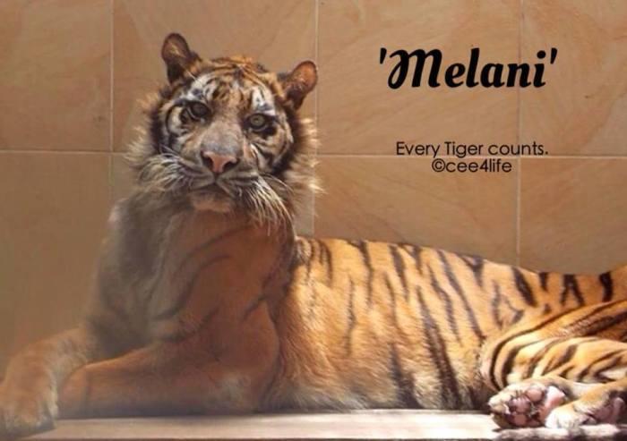 melani 1