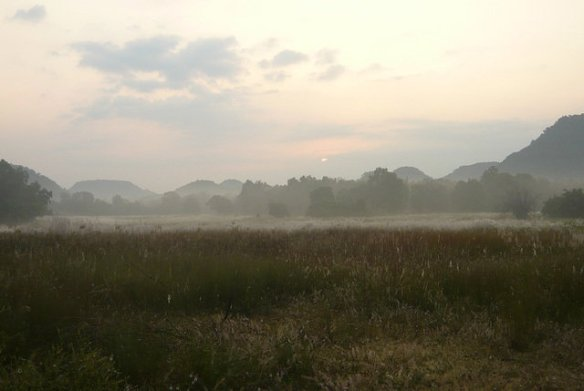 Early morning misty over Chakradhara meadow - As the season starts Bandhavgarh is green and fresh after the nasty Hud Hud cyclone (c) 2014