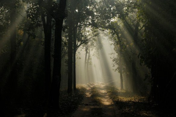A misty Magdhi zone forest (c) Kay Hassall Tiwari