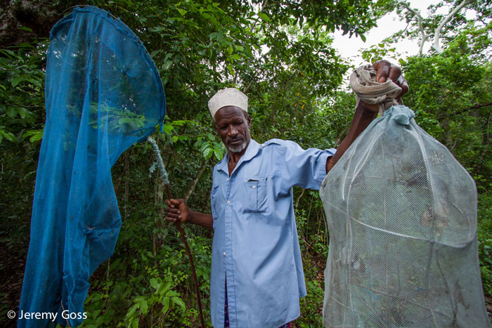 Members of the local communities are able to take advantage of income generating activities in the forest, such as this butterfly collector. These 'farmers' release female butterflies into large enclosures, and then harvest and export the ova laid by these individuals to live exhibits and butterfly houses in Europe and North America.