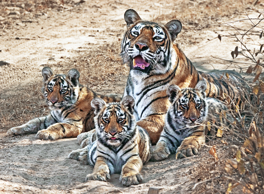 Photo: Aditya Singh.