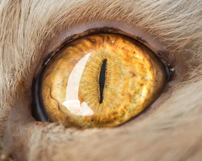 Macro Cat Eyes Portraits - by Andrew Marttila - be artist be art magazine