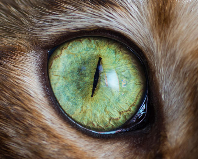 Macro Cat Eyes Portraits - by Andrew Marttila - be artist be art magazine